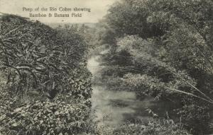 jamaica, Peep of the Rio Cobre showing Bamboo & Banana Field (1913)