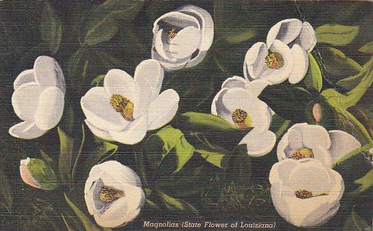 Magnolias The State Flower Of Louisiana 1949