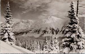 Half-Way Lodge Hart Highway Summit Pine Pass BC Begallie Unused Postcard D77