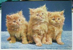 Postcard cat Kittens watch the birdie - unposted