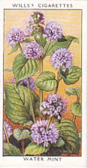 Wills Vintage Cigarette Card Wild Flowers 1936 1st Series No 23 Water Mint