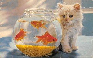 Watching and Waiting Fish Cat Unused
