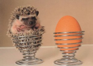 Baby Hedgehog in Eggcup Igel Eierbecher German Animal Comic Postcard