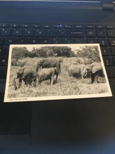 Vintage Postcard; East African Game , Elephants