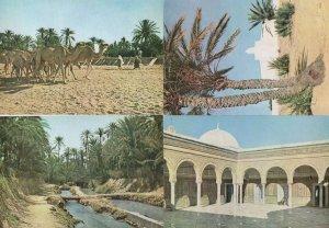 Gabes Gafsa Oasis Kairouan Djerba 4x Tunisie Postcard s