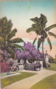 Purple Bougainvillea in Florida Albertype