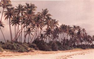 BR28007 Tanzanie tanzania