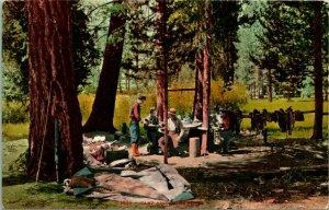 Vtg Postcard c 1910 - Camp Among The Pines - California - Ed Mitchell Pub.
