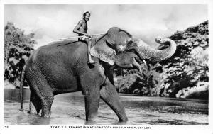 Kandy Sri Lanka (Ceylon) IN Elephant & Rider in Katugastota River~RPPC 1930s PC