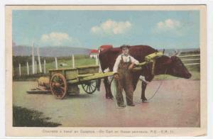 Ox Cart & Farmer Gaspe Peninsula Quebec Canada 1940 postcard