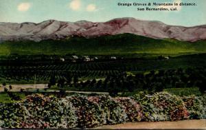California San Bernardino Orange Groves and Mountains In The Distance