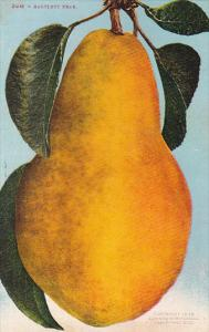 Bartlett Pear Fruit by Edward Mitchell