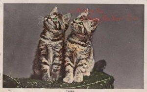 RP: NEW YEAR, PU-1909; Twins Kittens sitting pretty