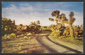 US - Desert Joshua Tree - Sentinel Of The Desert - (MX-036)