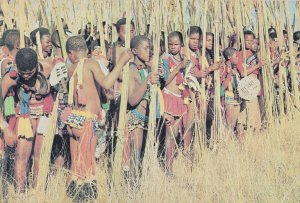 Swaziland Reed Dance Ceremony Africa Postcard