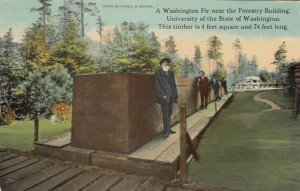SEATTLE, WA, 00-10s; Washington Fir near Forestry Bldg., U. State of Washington