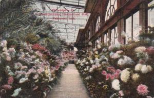 Pennsylvania Philadelphia Chrysanthemums Horticultural Hall Fairmount Park