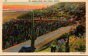 Cactus Along Mt Lemmon Road Near Tucson Arizona Curteich