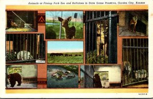 Kansas Garden City Animals At Finnup Park Zoo and Buffaloes In State Game Pre...