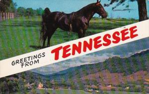 Tennessee Greetings With Tennessee Walking Horse 1958