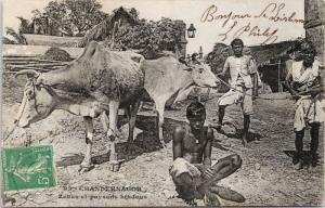 Chandernagor India Chandannagar Hindu Men Oxen Cart 1910s Postcard E39