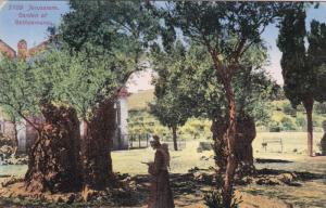 JERUSALEM , Israel , 00-10s ; Garden of Gethsemane