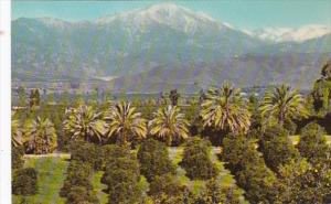California Orange Groves and Snow Capped Mountains