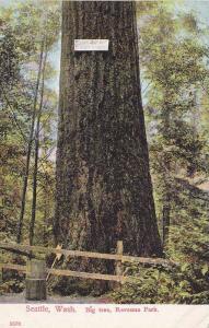 Big Tree,  Ravenna Park,  Seattle,  Washington,   00-10s