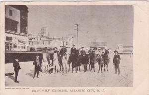 ATLANTIC CITY, New Jersey, PU-1907; Daily Excercise, Horses