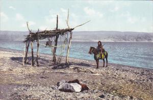 Israel Man On Horse The Dead Sea