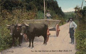 Canada Nova Scotia Ox Cart Hee Haw Express On Road To Bear River sk4732