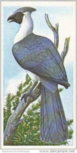Brooke Bond Vintage Trade Card Incredible Creatures 1986 No 39 White-Bellied ...