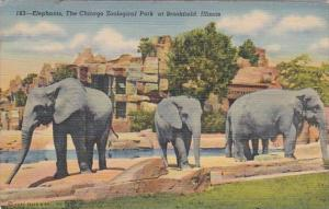 Ilinois Chicago Elephants At The Chicago Zoological Park At Brookfield Curteich