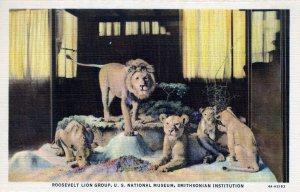 [ Photo-Colorit ] US Washington, D.C. - Smithsonian Roosevelt Lion Group