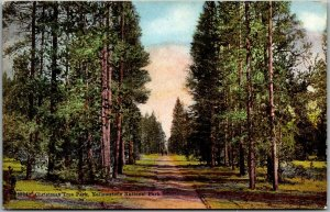 Vintage 1910s YELLOWSTONE NATIONAL PARK Postcard Christmas Tree Park Road View