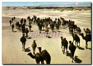 Postcard Modern Algeria South Fascinating