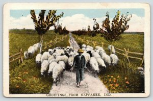 Nappanee Indiana~Shepherd Leads Lambs Down Narrow Road~Sheep Climb Fences~1923