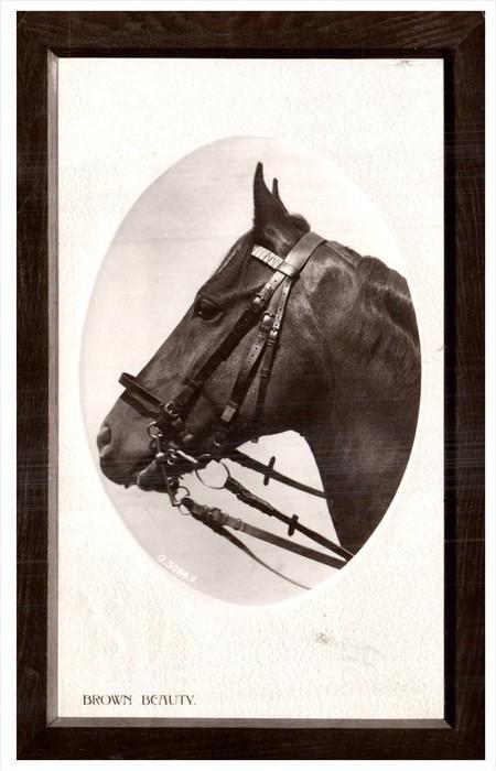 8264 Race Horse Brown Beauty Wood Grain Border RPC / HipPostcard
