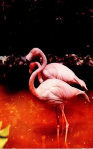 Birds Flamingos In Florida