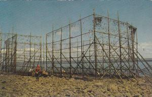 Fish Weir at Low Tide, Bay of Fundy, Nova Scotia, Canada, 40-60's