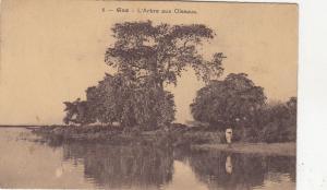 B81058 gao l arbre aux oiseaux sudan front/back image