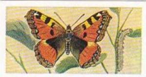 Swettenhams Tea Vintage Trade Card Butterflies & Moths 1958 No 7 Small Tortoi...