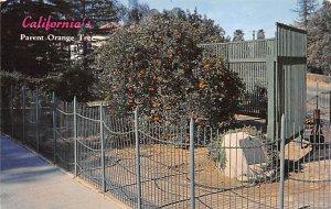 Fruit Assorted Parent Orange Tree California, USA Unused