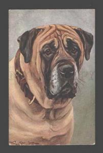 086820 Portrait Dog MASTIFF by LUKER vintage TSN #715