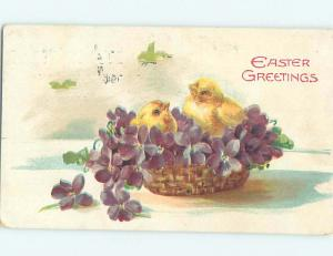 Divided-Back Easter CHICKS IN WICKER BASKET OF PURPLE FLOWERS o6443