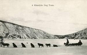 Canada - Yukon Territory, A Klondyke Dog Team