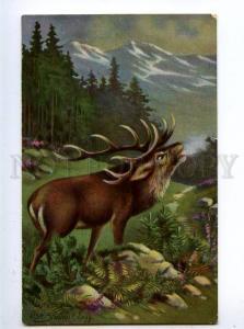 131930 HUNT Deer by STUDENT vintage Color PC