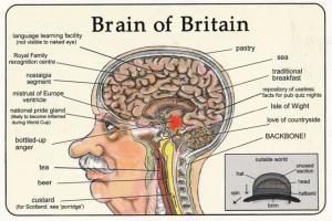 Beer Drinking Alcohol Brain Of Britain British Tourist Comic Humour Postcard