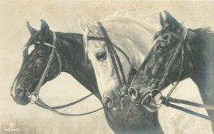 Horses early postcard