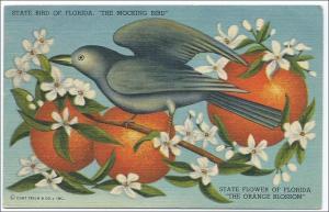 State Bird of Flordia - Mocking Bird